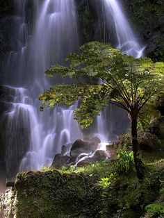 Wow, hope to see this waterfall too! Cascata — Achada (Nordeste), Sao Miguel, Azores, Portugal.