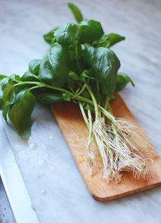 Gro ny basilika genom att sätta en kvist i vatten //Hem från Skanska Growing Gardens, Fruit Seeds, Natural Herbs, Edible Flowers, Green Plants, Going Vegan, Garden Inspiration, Garden Ideas, Houseplants