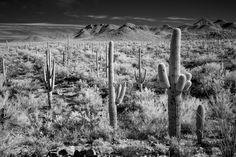 DP423  Saguaro National Park  www.phawkinsphoto.com  Peter Hawkin©2015 #SaguaroNationalPark #Tucson #Arizona  #500px 500px