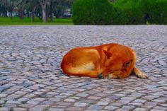 perro Corgi, Animals, Dogs, Animales, Animaux, Animal, Animais, Corgis