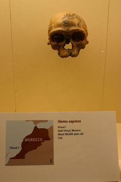 680px-Jebel_Irhoud_1-Homo_Sapiens.jpg (680×1024) - Hall of Human Origins, Smithsonian National Museum of Natural History, USA. Auteur : Ryan Somma, 1980.