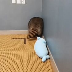 This cat is acting real weird – Gif