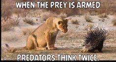 When the prey is armed, predators think twice.