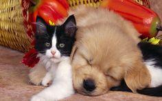 bebek kedi ve köpek uyurken