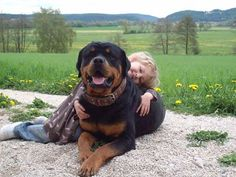 Outstanding rottys information is available on our site. Read more and you will not be sorry you did. Fluffy Puppies, Dogs And Puppies, Doggies, Big Dogs, I Love Dogs, Beautiful Dogs, Animals Beautiful, Rottweiler Husky Mix, Animals For Kids