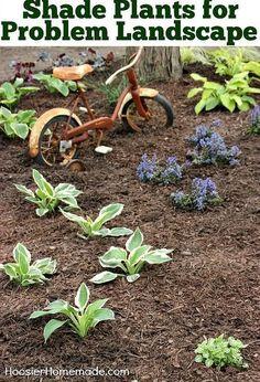 shade plants for problem landscape, gardening