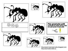 * Orden de mieren van groot naar klein