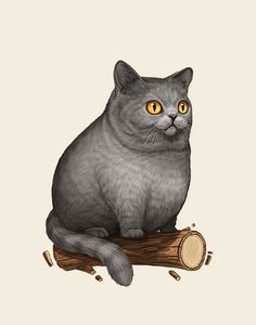British Shorthair Cat - Mike Mitchell - Fat Friends - Mondo and like OMG! get some yourself some pawtastic adorable cat apparel! Mike Mitchell, Fat Cats, Cats And Kittens, F2 Savannah Cat, Grey Cats, British Shorthair, Cat Sitting, Cat Drawing, Crazy Cat Lady