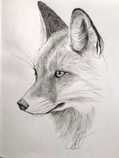 Fox, micron sketch by Margaret Dean – Art Sketches Realistic Animal Drawings, Pencil Drawings Of Animals, Cool Art Drawings, Animal Sketches, Art Drawings Sketches, Drawing Ideas, Drawings Of Elephants, Hirsch Illustration, Fox Illustration