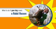 New Rabies Regulations Could Save Your Dog's Life - Dogs Naturally Magazine