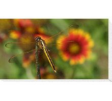 dragon fly, flower, insect, nature