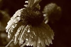 Flower get wet after summer rain, flower photography, nature photography, macro, instant download, JPG, wall art decor