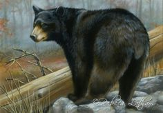 Paintings by international wildlife artist Rebecca Latham. Featuring North American animals, birds, & nature in watercolor painted in miniature. Bear Paintings, Wildlife Paintings, Small Paintings, Watercolor Paintings, Art D'ours, North American Animals, Timberwolf, Bear Drawing, Drawing Art