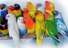 A lovebird decor : : Lioden