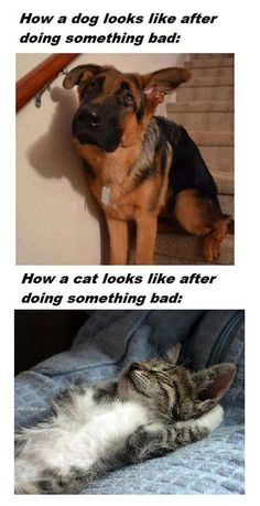 Big reason why dogs are better than cats, dogs actually show they learn. Cats are just little rodent butt holes.