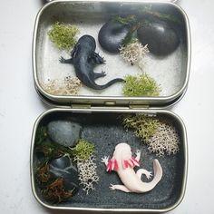 WiP - Mini Axolotl Tin Ponds by Bon-AppetEats.deviantart.com on @DeviantArt