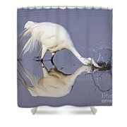 Great Egret Dipping For Food Shower Curtain by Bill And Deb Hayes