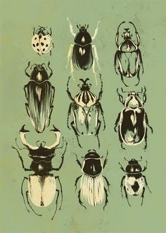 Moss Beetle Collection by Teagan White White chalk and charcoal on toned paper!