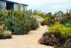 Sarah and Roger Budarick's drought tolerant garden, Boat's End, in Australian House and Garden.