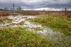 Swamps of Paljuvi Lake // (Serbia, Jabucje)