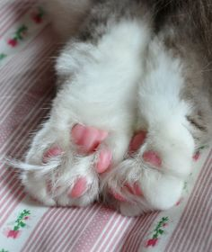 Pink jelly beans and floof! Crazy Cat Lady, Crazy Cats, Cat Paws, Dog Cat, I Love Cats, Cute Cats, Pink Jelly Beans, Bell The Cat, Soft Feet