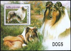 Dog Stamp, Rough Collie, Islamic State of Afghanistan