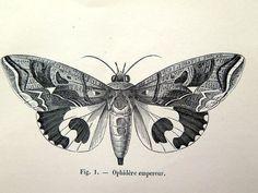 imprimer papillons papillons antique de 1860 par LyraNebulaPrints
