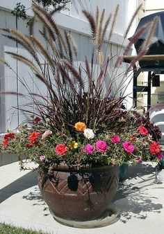 How to use purple fountain grass as a container plant.: Purple fountain grass thrives as a container plant. Container Flowers, Container Plants, Container Gardening, Succulent Containers, Vegetable Gardening, Organic Gardening, Fountain Grass, Decoration Plante, Garden Planters