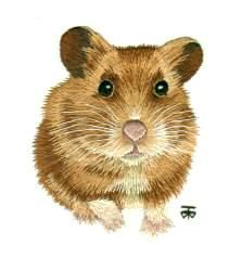 Hamster Needle Painting or Thread Painting Hand Embroidery by Tanja Berlin: Berlin Embroidery Designs.  Long and short surface embroidery stitches worked in DMC embroidery cotton on Southern belle muslin fabric.