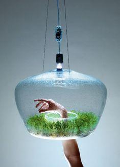 Glasshouse terrarium hanging pendant lamp