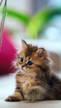 mačička fotky upclose