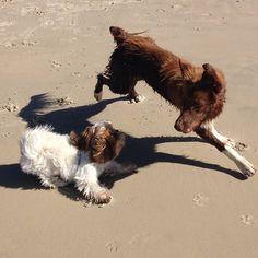 Olá Princesas! A matéria do blog de hoje é sobre diferença e respeito com o Strike Saltador! #strike #strikeocachorrinhomaiafelizdomundo #dog #cachorro #diferença #respeito Veja o blog e me diga: O que achas?