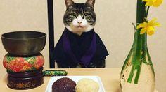Gatinho usa uma roupa diferente todos os dias no jantar!