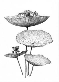 imaginary acoustic plants