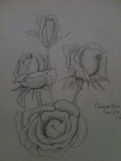 Roses sketched in pencil By Jeanne Tyrrell