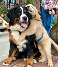 Say hello to my favorite neighbor furiend Big Hugo - Welpen Super Cute Puppies, Cute Baby Dogs, Cute Little Puppies, Super Cute Animals, Cute Dogs And Puppies, Cute Little Animals, Cute Funny Animals, Funny Dogs, Doggies