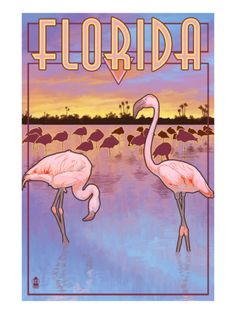 Florida Flamingo Poster