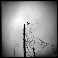 © Marc Belli