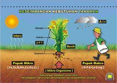 BPP Jambi - Balai Pelatihan Pertanian Jambi