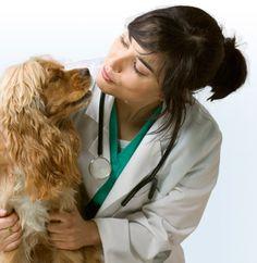 veterinians and animals   Admiral Veterinary Hospital
