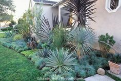 Southern California. front yard garden border with succulents and blue fescue grass