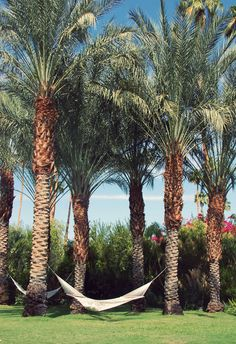 Palm trees at The Parker Palm Springs (photo by @Nubby Twiglet)  #Florida