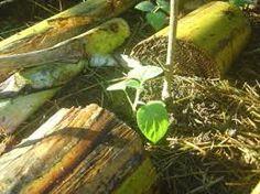 Resultado de imagen para como cortar tronco de coqueiro para fazer vaso