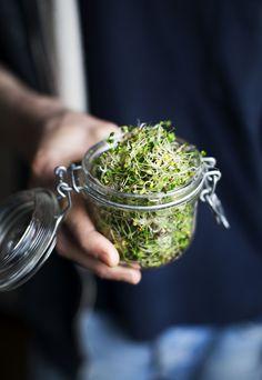 Broccoli Sprouts / Broccoligroddar - Evelinas Ekologiska