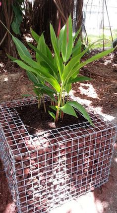 gabion basket planter