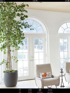 House beautiful - house plant