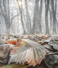 Crystalline spice by Adrian Borda on 500px