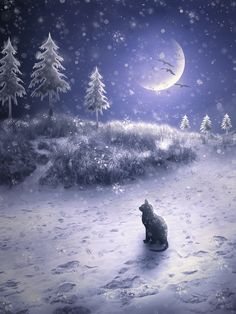 """The Cat's Christmas"" • A mixed media photography and vector based artwork by Jenny Woodward"
