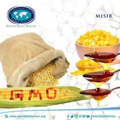 Şu anda dünyada en çok yetiştirilen tarım ürünü mısırla ilgili bilmemiz gerekenler bununla sınırlı değil. Dünyada mısır kullanımı 1,05 milyar ton civarındadır ve sırasıyla ABD, Çin, Brezilya, AB, Meksika, Arjantin ve Hindistan en büyük üretici ülkelerdir. Enerjiden kozmetiğe, yemden insan gıdasına kadar çok geniş bir kullanım alanına sahip mısır, elbette ki gelişen teknoloji ile de ilk tanışan ürünlerdendir.GDO'lu üretim metotlarının ilk olarak denendiği ve en yaygın uygulandığı tarım… Margarita, Tableware, Dinnerware, Tablewares, Margaritas, Dishes, Place Settings