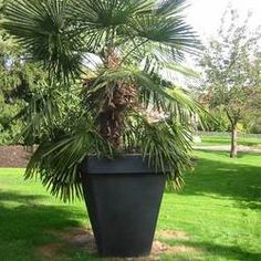potdejardin grand pot carr dco 1030 x 1030 mm plastique papi made in france - Grand Pot Pour Jardin